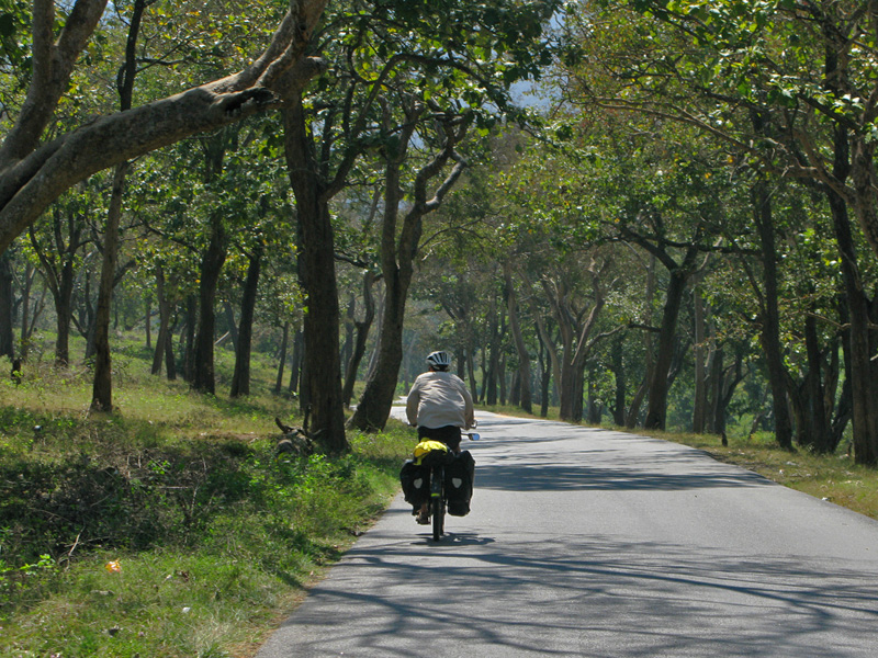 Guy cycling in Mudumalai National Park