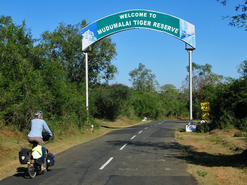 Cycling into a tiger reserve