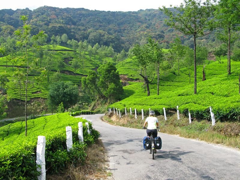 Tea plantation patchwork